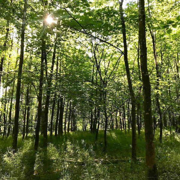 CO2-Ausgleich mit dem Aufforsten von Wäldern leisten!